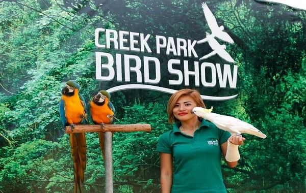 Bird Show At Dubai Creek Park