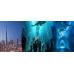 Dubai City Tour + ATT + DUAZ