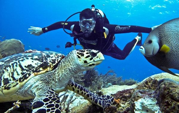 Scuba Diving -  Jumeirah