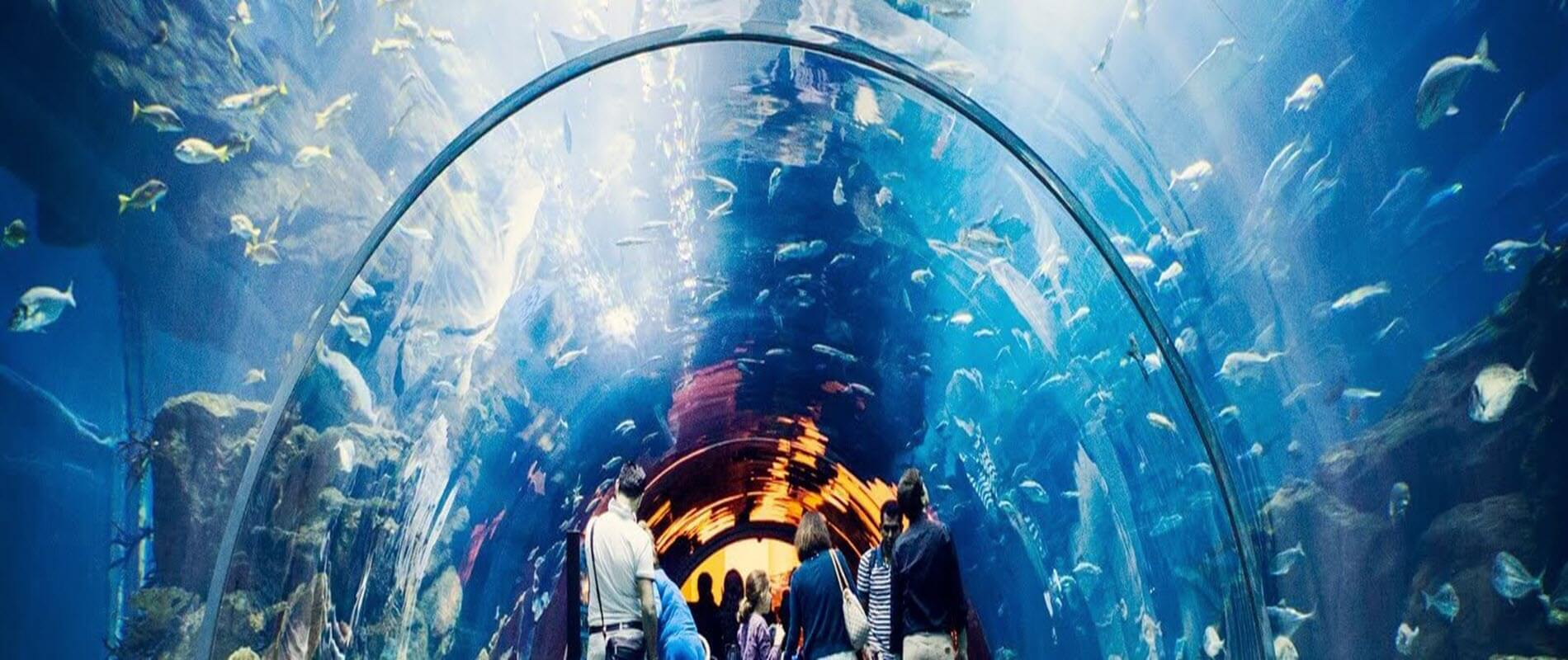 Dubai City Tour + Dubai Aquarium