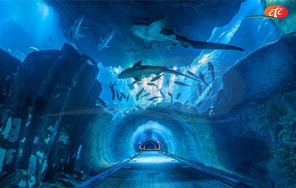 Dubai Aquarium Explorer Experience