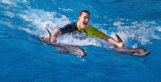 Dolphin Encounter - Atlantis The Palm