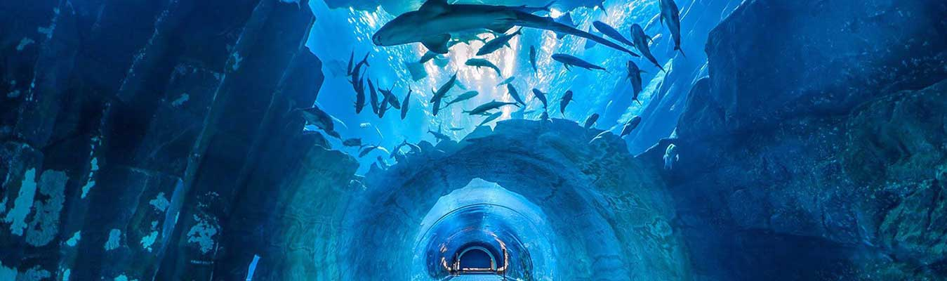 Dubai City Tour and Dubai Aquarium & Underwater Zoo