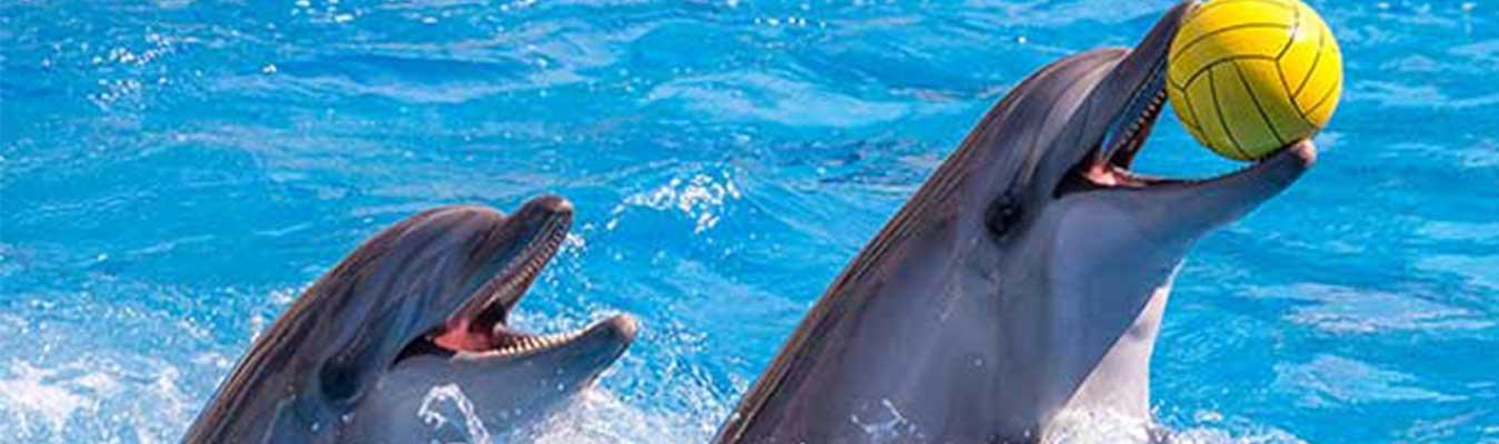 Dubai Dolphinarium VIP