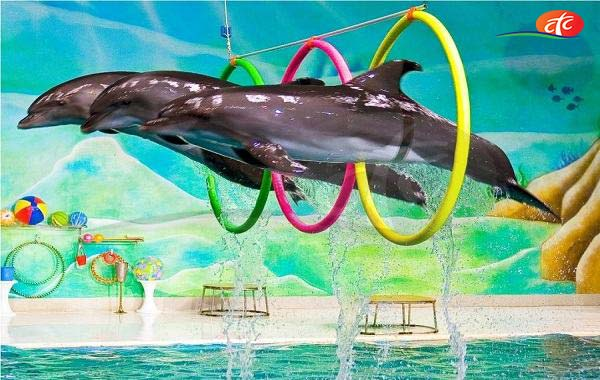 Dolphinarium - Dolphin and Seal Show